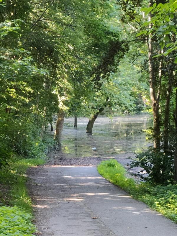 Hochwasser im Neckarauer Waldpark